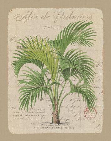 Alee de Palmiers Prints by Hugo Wild