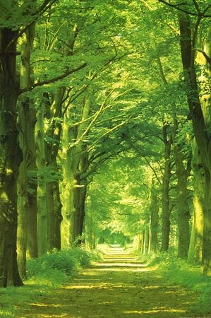 Forest Path Print by Hein Van Den Heuvel