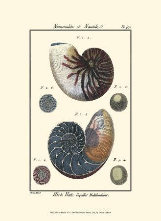 Sea Shells VI Prints by Denis Diderot