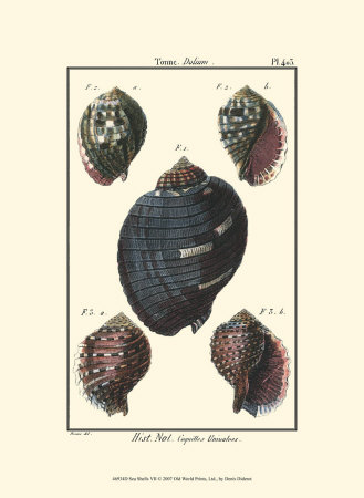 Sea Shells VII Posters by Denis Diderot