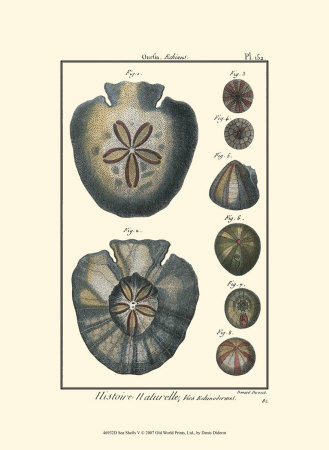 Sea Shells V Posters by Denis Diderot