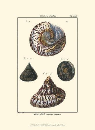 Sea Shells II Prints by Denis Diderot