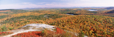 Trees on a Mountain, Bangor Area, Peaked Mountain, Clifton, Maine, USA Photographic Print by  Panoramic Images