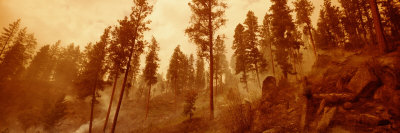 Trees in a Forest, Bitteroot Valley, Montana, USA Photographic Print by  Panoramic Images