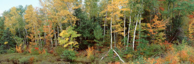 Trees in a Forest, Vilas County, Lac du Flambeau, Wisconsin, USA Photographic Print by  Panoramic Images