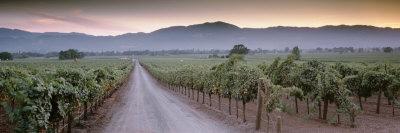 Road in a Vineyard, Napa Valley, California, USA Photographic Print by  Panoramic Images