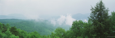 Fog over a Forest, Great Smoky Mountain National Park, North Carolina, USA Photographic Print by  Panoramic Images