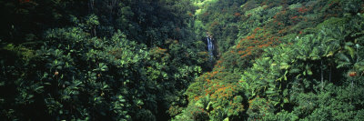 Rainforest, Hawaii, USA Photographic Print by  Panoramic Images