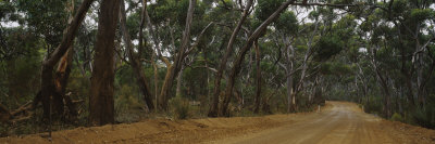 Dirt Road Passing through a Forest, Kangaroo Island, Australia Photographic Print by  Panoramic Images