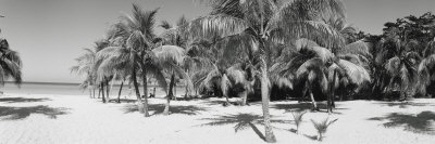 Palm Trees on the Beach, Negril, Jamaica Photographic Print by  Panoramic Images