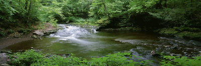 River Flowing through a Forest, Ricketts Glen State Park, Pennsylvania, USA Photographic Print by  Panoramic Images