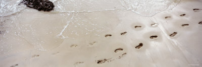 Footprints on the Beach, Railay Beach, Krabi, Thailand Photographic Print by  Panoramic Images