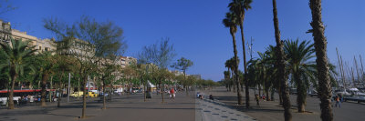 Trees on the Street, Barcelona, Catalonia, Spain Photographic Print by  Panoramic Images