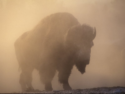 Yellowstone Park Images. Yellowstone National Park,