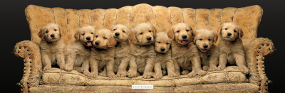 Golden Pup Line-Up Kunstdruck