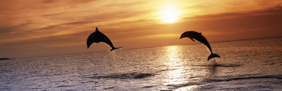 Sunset Dolphins Art Print