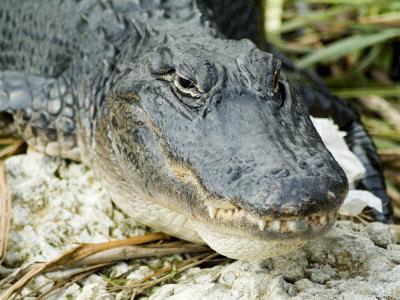Everglades National Park. Everglades National Park,