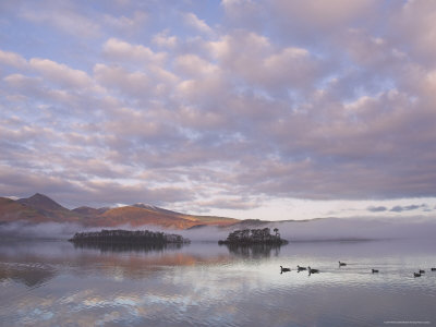 Canada Geese, Derwent Water, Lake District National Park, Cumbria, England, United Kingdom Photographic Print by Neale Clarke