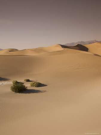 The Sand Dunes, Death Valley National Park, California, USA Photographic Print
