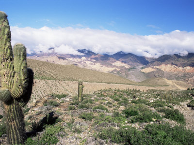 Cardones Growing in the Desert at 3000 Metres, Near Alfarcito, Jujuy, Argentina, South America Photographic Print by Lousie Murray