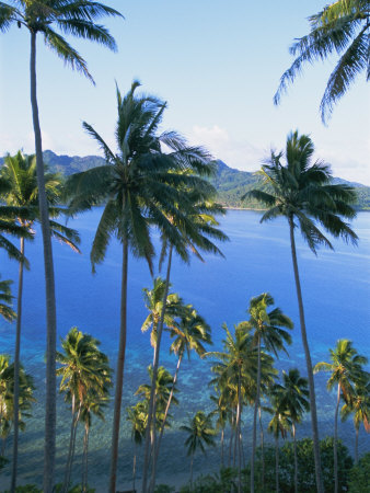 Palm Trees at Matangi Island, Qamea Island in Background, Fiji, South Pacific Islands Photographic Print by Lousie Murray
