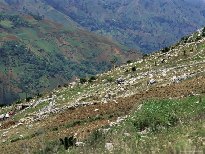 People Working in Steep Mountain Fields, at 2000M, Haiti, West Indies, Central America Photographic Print by Lousie Murray