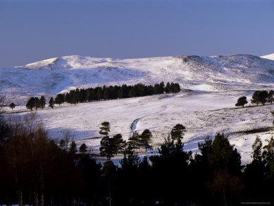 Pines on Winter Hillside, Cairngorm Mountains, Deeside, Highland Region, Scotland Photographic Print by Lousie Murray