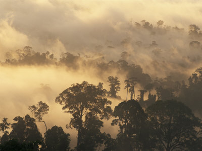 Rain Forest, Borneo, Southeast Asia Photographic Print by Lousie Murray