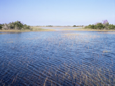 Everglades, Florida, USA Photographic Print by Derrick Furlong