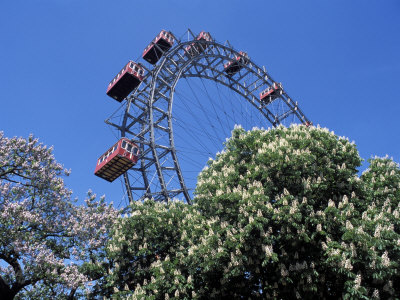 View of the Giant Prater Ferris Wheel Above Chestnut Trees in Bloom, Vienna, Austria Photographic Print by Richard Nebesky
