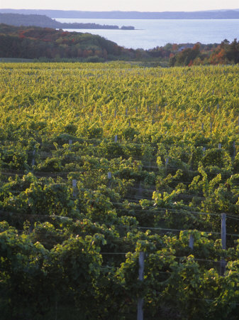 Vineyards Near Traverse City, Michigan, USA Photographic Print