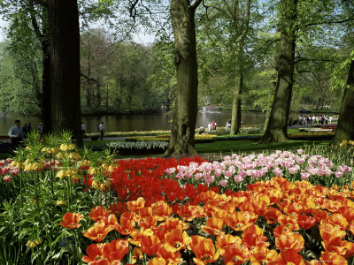 Tulips, Keukenhof Gardens, Lisse, Holland Photographic Print by I Vanderharst