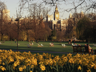 Daffodils in St. James's Park, with Big Ben Behind, London, England, United Kingdom Photographic Print by I Vanderharst