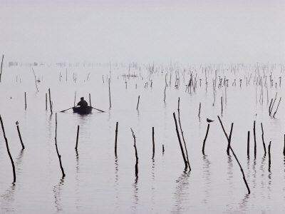 Oyster Beds, Arcachon, Gironde, Aquitaine, France Photographic Print by Adam Woolfitt