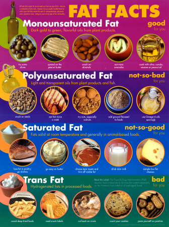 Fat Facts Affiche laminée