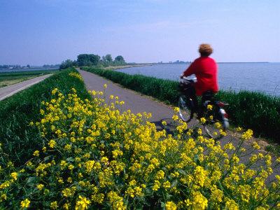 Woman Cycling Atop Polder Dike, Netherlands Photographic Print by John Elk III