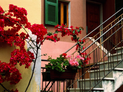 Flowers and Painted Houses in Town in Cinque Terre, Manarola, Liguria, Italy Photographic Print by Diana Mayfield