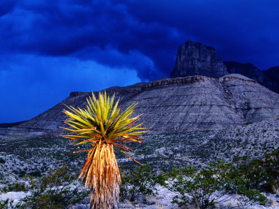 Yucca with Thunderstorm in Background, Guadalupe Mountains National Park, Texas Photographic Print by Holger Leue