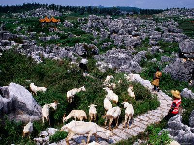Goats and Goatherds, Stone Forest, Kunming, Yunnan, China Lámina fotográfica