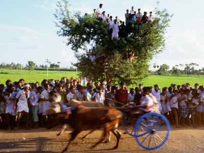 Bullock Cart Race, Madurai, Tamil Nadu, India Photographic Print by Greg Elms