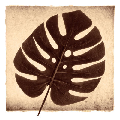 Monstera I Art Print