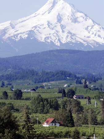 Mount Hood over Houses Scattered amongst Orchards and Firs, Pine Grove, Oregon Photographic Print by Don Ryan