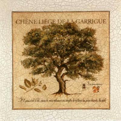 Chene Liege de la Garrigue Print by Pascal Cessou