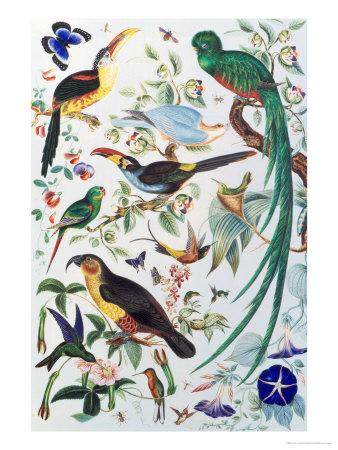 Exotic Parrots, c.1850 Giclee Print by John James Audubon