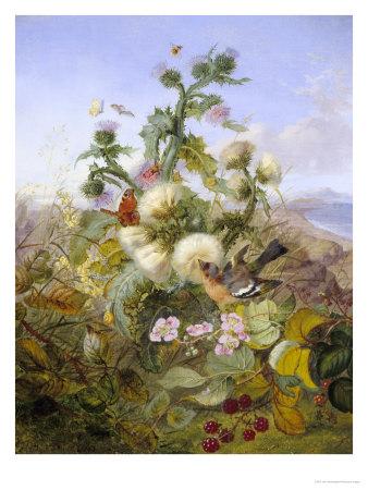Nature's Glory Giclee Print by John Wainwright