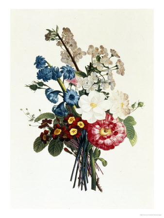 Bouquet of Camellia and Auricula Giclee Print by Jean Louis Prevost