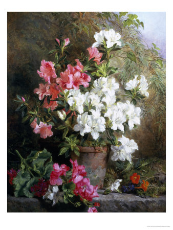 Still Life of Azaleas Giclee Print by Annie Feray Mutrie