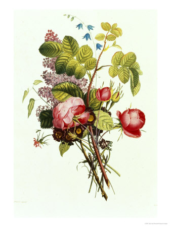 Bouquet of Rose, Lilac and Auricula Giclee Print by Jean Louis Prevost