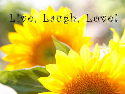 Live, laugh, love sunflower rose plant by Nicole Katano