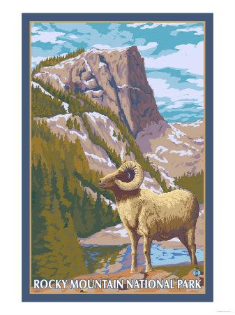 Big Horn Sheep, Rocky Mountain National Park Art by  Lantern Press